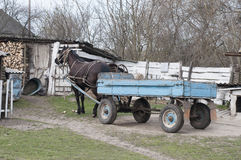 Horse with a cart Stock Image