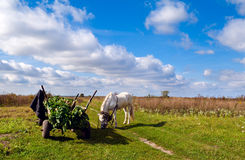 Horse and cart on the field Royalty Free Stock Photography