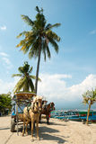 Horse and Cart on Gili Air, West Nusa Tenggara, Indonesia Royalty Free Stock Images