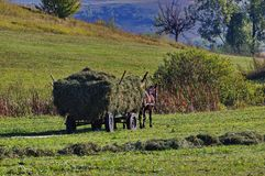 Horse cart. With hay in the meadow Stock Photo