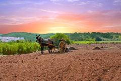 Horse cart with horse and a load of grass in the countryside from Portugal Royalty Free Stock Photography