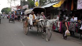 Horse & Cart in Indian street stock video footage