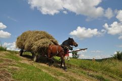 Horse with a cart loaded hay. Stock Photography