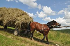Horse with a cart loaded hay. Stock Photo
