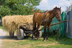 Horse with a cart loaded hay Stock Image