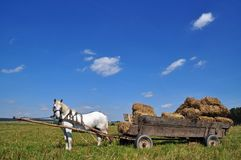 Horse with a cart loaded hay bales Royalty Free Stock Photo