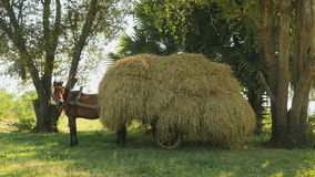 Horse cart loaded with hay,  horse cart stock video