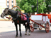 Horse and cart at main street in Nizhny Novgorod Stock Image