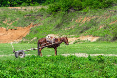 Horse with cart Royalty Free Stock Photography