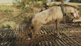 Horse cart,  mekong, transport, cambodia. Southeast asia, Cambodia, Kampong cham , november  2013. Horse  get stuck in the mud stock footage