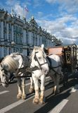 Horse cart near museum in Saint Petersburg royalty free stock photography