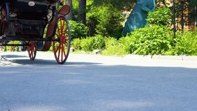 A horse cart with people. People ride a horse cart in a public park stock video
