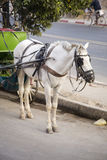Horse and cart on road Royalty Free Stock Image