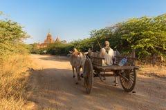 Horse cart running in Bagan plain Stock Photography