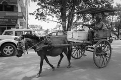 A horse cart running on rural road in Gaya, India.  Royalty Free Stock Image