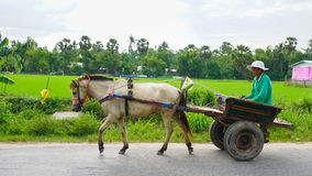 A horse cart on rural road in Van Duc town, Hanoi, Vietnam Royalty Free Stock Images