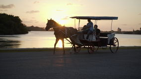 Horse cart at sunset stock video footage