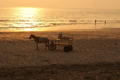 A horse cart for tourists in a beach. A horse cart standing in a  beach in India, for tourists, at the backdrop of setting sun Stock Image