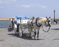 Horse cart for tourists in Hania, Crete stock photography