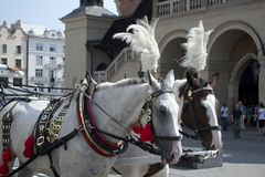 Horse and cart Stock Image