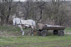 Horse with a cart Stock Photography