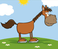 Horse Cartoon Mascot Character On A Meadow Royalty Free Stock Photo