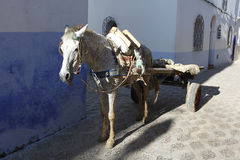 Horse carts in Morocco Stock Photo