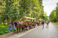 Horse carts in Tatra National Park Royalty Free Stock Photography