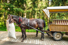 Horse carts in Tatra National Park Royalty Free Stock Photos