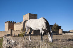 Horse and Castle Royalty Free Stock Images