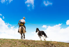 Horse catching in Mongolia Royalty Free Stock Photo