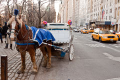Horse Chariot in New York City Royalty Free Stock Photography