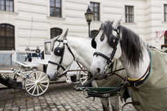 Horse chariots in front of Hofsburg in Vienna Royalty Free Stock Photography