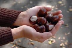 Horse-chestnut Royalty Free Stock Photo