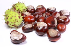 Horse chestnut Royalty Free Stock Photography