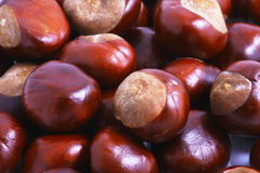 Horse chestnut. Background. Close Up Stock Photography