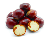 Horse chestnut. On a white background royalty free stock image