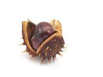 Horse Chestnut Stock Photography
