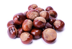 Horse chestnut Stock Photos