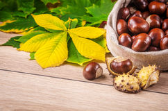Free Horse Chestnut Royalty Free Stock Photography - 45658077