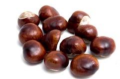 Horse chestnut, (Aesculus hippocastanum), fruit Royalty Free Stock Image