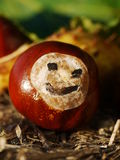 Horse chestnut autumn fall smiley Royalty Free Stock Image