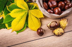 Horse chestnut Royalty Free Stock Images
