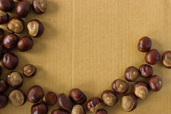 Horse chestnut on a background of cardboard Stock Image