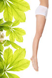 Horse chestnut body cream. Woman legs with moisturizer horse chestnut body cream Royalty Free Stock Photos