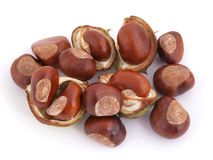 Horse chestnut, Conker. Stock Photos