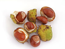 Horse chestnut, Conker. A conker is the seed of a horse chesnut tree royalty free stock photo