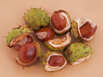 Horse chestnut, Conker. A conker is the seed of a horse chesnut tree Royalty Free Stock Images