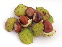 Horse chestnut, Conker. A conker is the seed of a horse chesnut tree Stock Image