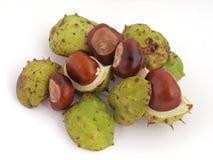 Horse chestnut, Conker. Stock Image
